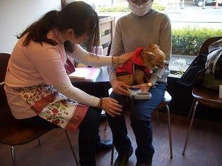 Wanダフルスマイル ~こうご動物病院の日々~